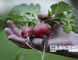 El peligro de la retirada de la condicion de organización de productores de frutas y hortalizas (opfh) como consecuencia de la externalizacion de las actividades